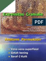 Extremitas Cranialis 1-2