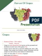 609 Grapes