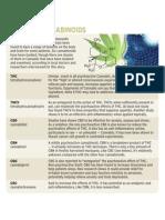 Meet the cannabinoids