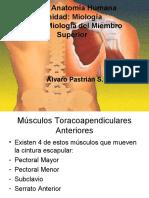 Miología Miembro Superior