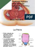 Miología Pelvis y periné