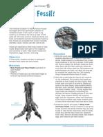 Dino 02 Fossils