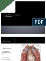 Morfofisiología del corazón