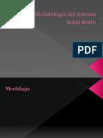 Morfofisiología del sistema respiratorio