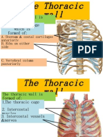 Thorax 1