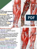 Nerves in Forearm