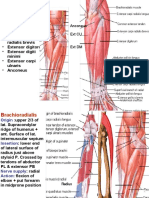 Muscles Of back of Forearm