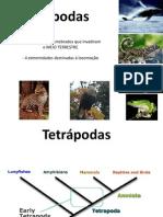 Tetrapodes PDF