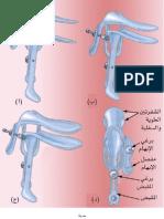 Atlas of Obstetrics Gynecology