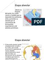 Etapa alveolar