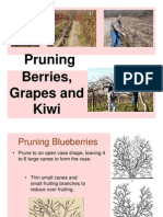 Pruning Berries Grapes and Kiwi
