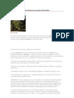 Circulación por pistas forestales