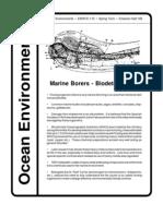 Marine Borers Bio Deterioration