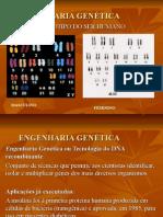 4-Aula proj.genoma