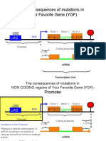 Translation Mutations Molecular Biology