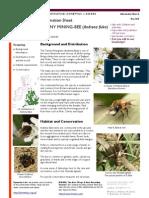 Andrena Fulva 1col Infosheet