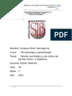 Estudios Morfologiacos Bacilos Gram - Micro