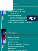 Piso_Perineal