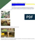 Fotos de Huertos Hidropónicos Caseros