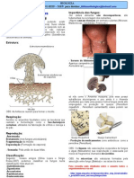 Bio Resumos Reino Fungi