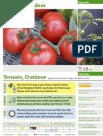 Outdoor tomato