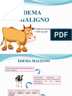 Edema Maligno Exp (1)
