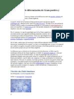 Fundamentos de diferenciación de Gram positivo y Gram negativo