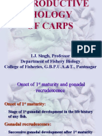 reproductive biology of carps