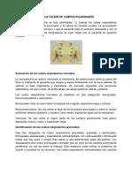 Auscultacion de Campos Pulmonares y Oxigenoterapia[1]