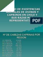 Caprinos en Chile