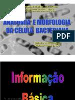 Anatomia_e_Morfologia_da_Célula_Bacteriana