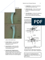 Proximal Humerus and Shoulder Joint