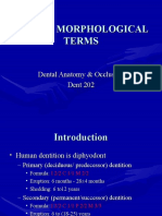 Lecture 3, Dental Morphological Terms