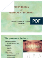 Morphology of Permanent Incisors