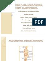 Anatomia Del Sistema Nervioso3