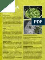 Revista_AE_Nº2_ficha_planta
