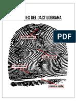 Regiones Del Dactilograma2011