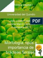 Morfologia Tipos e Importancia de Las Bracteas Florales