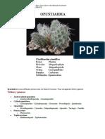 taxonomia subfamilia opuntiaidea