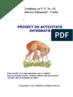 Proiect Grad Carnal[1]