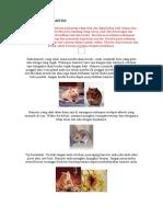 Kesihatan Hamster