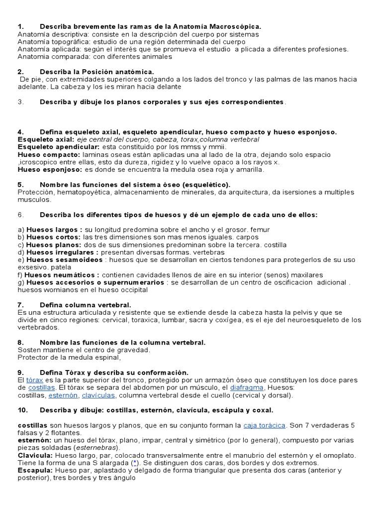 Lujoso Anatomía Microscópica De Hueso Cresta - Imágenes de Anatomía ...