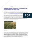 Jeffrey Smith  Monsanto's Roundup Triggers Over 40 Plant Diseases and Endangers Human and Animal Health