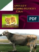 capitulovbasesoseaspelvisymuslo-091119183512-phpapp02
