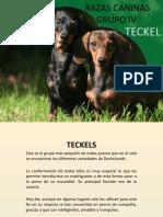 Razas Caninas Grupo IV (Teckel)