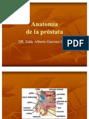 lóbulo prostático medio que se proyecta hacia la vejiga durante 2 4 cm 1