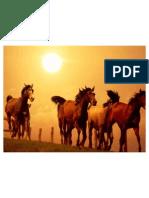 Comport a Mien To de Ingesta y Eliminacion (Equinos)