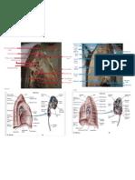 Median Lungs