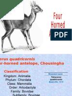 Four horned antelope