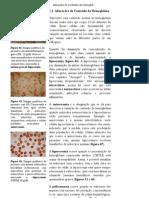 Alterações do Conteúdo da Hemoglobina